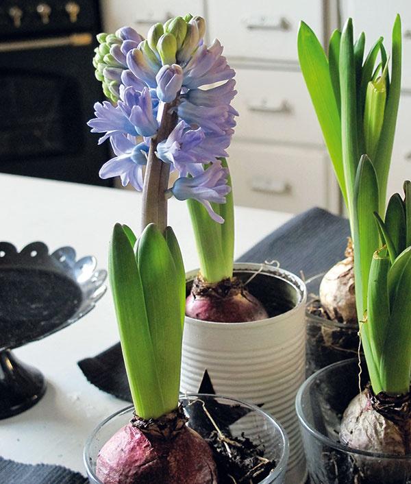 Jarné kvety vás prebudia adajú vám časť svojej teplej energie,vprípade hyacintov aj krásnej vône.