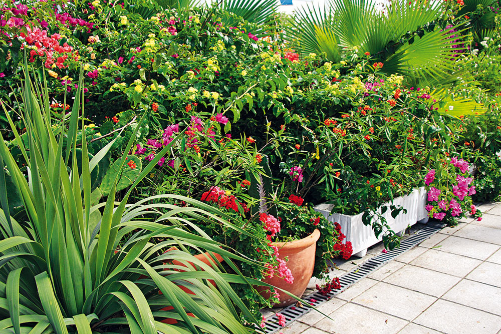 Vmáji nájdete vzáhradníctvach množstvo rastlín pôvodom zo Stredomoria, ktoré môžete vlete pestovať vnádobách na terasách aj vzáhradách. Rastliny ale nie je možné mať vonku celoročne ana zimu ich bude potrebné preniesť do chladnej asvetlej miestnosti. Knajkrajším patria oleandre, bugenvilea, durmany, olovník, ľuľok, agapant, mandevila, lantana, ibištek, myrta či vavrín. Predpokladom úspešného pestovania je slnečné ateplé, no dobre chránené miesto, substrát sdlhodobo pôsobiacim hnojivom avýdatná zálievka. Rastlinám doprajte priestranné, ideálne terakotové nádoby.