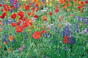 Ako na zakladanie ekozáhrady