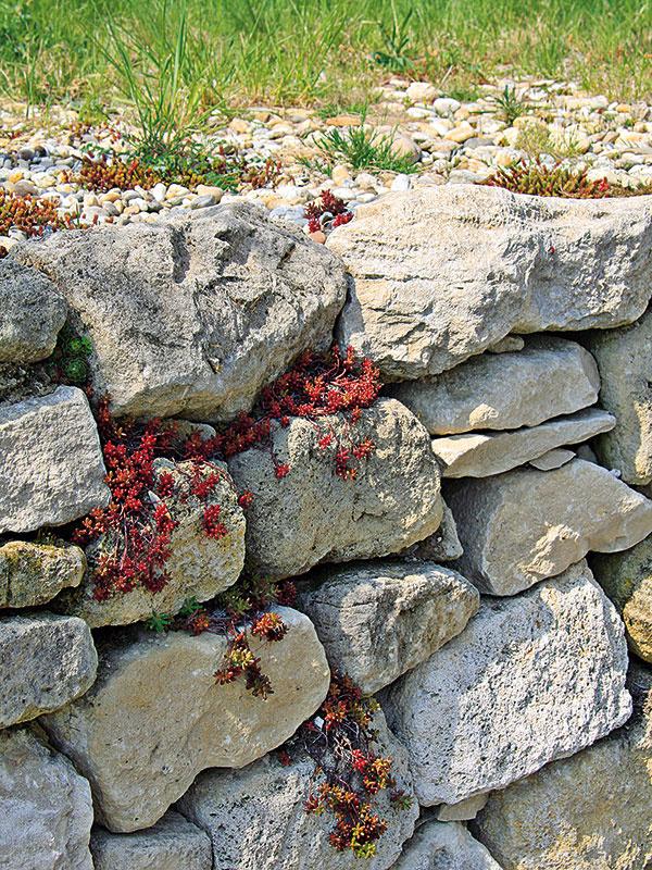 Vsuchých kvetinových múrikoch si môžete vypestovať rozmanité druhy skalničiek, ktoré zároveň poskytnú úkryt užitočným živočíchom, napríklad jaštericiam.