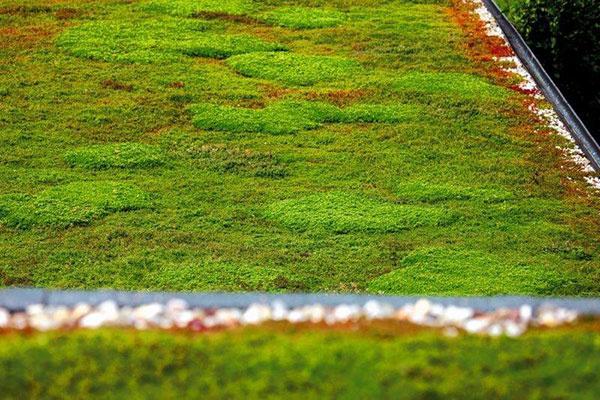 Zelené strechy zlepšia celkovú klímu v dome a zvýšia jeho estetiku