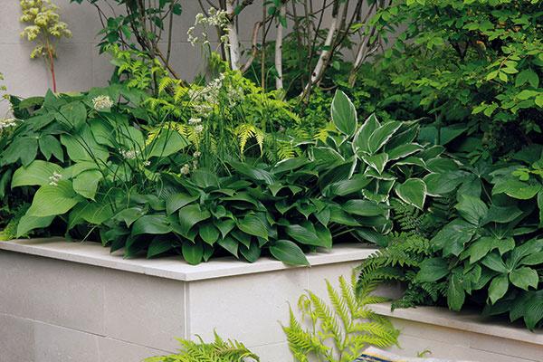 Dizajnér záhradu precízne rozčlenil do geometrických tvarov. Poslúžili mu na to predovšetkým vyvýšené záhony, vktorých nájdete prevažne tieňomilné rastliny.