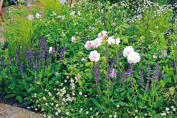 Spoločnosť pre ruže      Vjúni si môžete do záhrady vysadiť ruže skoreňovým balom. Nádherné sú isamostatne, ale oveľa krajšie vspoločnosti iných kvitnúcich rastlín, trvaliek či cibuľovín. Pri výbere spoločníkov zohľadnite ich rastové charakteristiky, ako aj podmienky daného miesta. Ztrvaliek sa kružiam na slnečné apolotienisté miesta hodia pakosty, zvončeky, čistec, šalvia, alchemilka, krásnoočko, rebríček, levanduľa, kocúrnik či gypsomilka aveľmi pôsobivé sú aj stračonôžky či náprstníky. Viaceré znich si teraz môžete vysadiť skoreňovým balom aj vkvitnúcom stave. Smnožstvom to ale určite nepreháňajte, radšej si zvoľte dva či tri druhy azaujímavo ich striedajte.