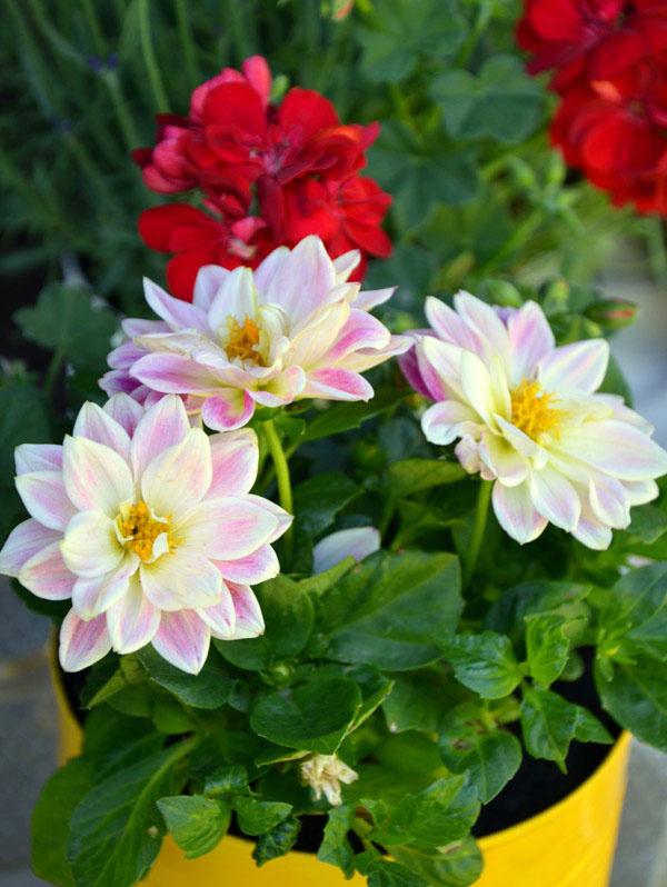 4 Do takto pripravených násob vysaďte jednotlivé rastliny a umiestnite ich na vhodné miesto.