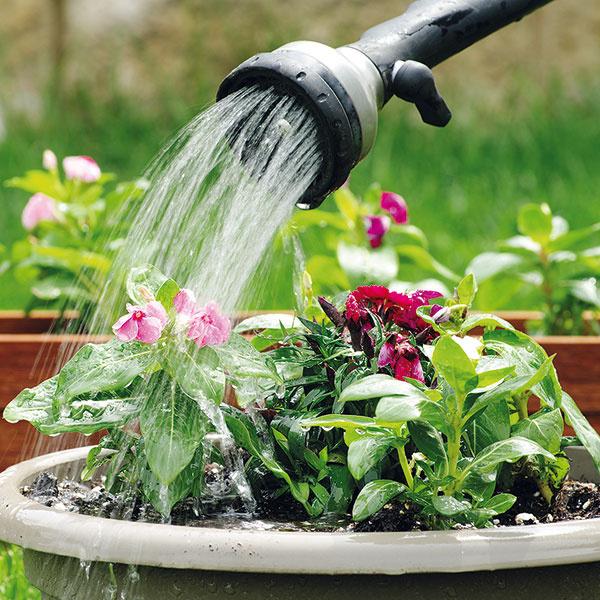 Exteriérovú zeleň je počas leta najlepšie zavlažovať skoro ráno. Keďže je chladnejšie, vlaha sa vpôde udrží dlhšie arastliny majú šancu lepšie ju zužitkovať. Substrát by mal vždy medzi zálievkami mierne preschnúť. Zeleň by sa mala zalievať ku koreňom. Ráno sa však nič nestane, ak sa voda dostane aj na listy či kvety. Pri večernej zálievke je vyššie riziko napadnutia hubovými ochoreniami – na listoch sa totiž vlhkosť udrží až do rána, kým po rannej zálievke listy rýchlo osychajú. Efektívnejšie je zalievať radšej menej často, ale intenzívnejšie. Každodenné mierne zvlhčovanie povrchu pôdy nemá význam arastliny tým skôr trpia. Na prevlhčenie pôdy do hĺbky asi 20 až 25cm je potrebných 20 až 25 l vody na 1 m2. Teplota vody pritom nesmie byť nikdy nižšia ako teplota pôdy (ani veľmi vyššia – mala by mať maximálne o5 °C viac). Vjednotlivých fázach rastu majú pritom rastliny rôzne požiadavky na vodu. Na začiatku vegetácie je spotreba spravidla vyššia ako napríklad včase dozrievania. Vo vš