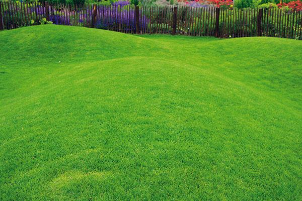 Trávnik vletných mesiacoch aspoň raz týždenne pokoste araz za dva až tri dni výdatne zalejte (asi 10 l vody/1 m2). Aj vlete je nevyhnutné prihnojiť ho. Ideálne je použiť dlhodobo pôsobiace granulované hnojivá, prípadne hnojivé zálievky. Efektívne sú aj hnojivá sherbicídnou zložkou, vďaka ktorej ztrávnika zmizne drobná burina. Prihnojovaný trávnik je zároveň odolnejší proti suchu aj chorobám. Ďalšie hnojenie potom zrealizujte začiatkom jesene. Pokiaľ ide okosenie, vlete je optimálna výška trávnika 4 až 7cm – táto výška ochráni koreňový systém aj pôdu pred priamym slnkom azároveň vtrávniku dlhšie udrží vlahu. Pred dovolenkou trávnik dôkladne zavlažte anepokoste ho príliš nakrátko.