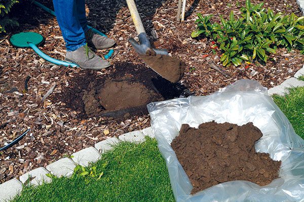 Na mieste výsadby rýľom vykopte jamu adno prekyprite. Vykopanú zeminu sústreďte na pripravenú fóliu, čím zabránite problémom sjej následným odstraňovaním. Vrchnú časť zeminy (tesne pod povrchom pôdy) oddeľte od tej, ktorá bola pri koreňoch. Vprípade jej opätovného použitia sústreďte zeminu, ktorá bola navrchu, na dno výsadbovej jamy, pretože obsahuje viac živín.