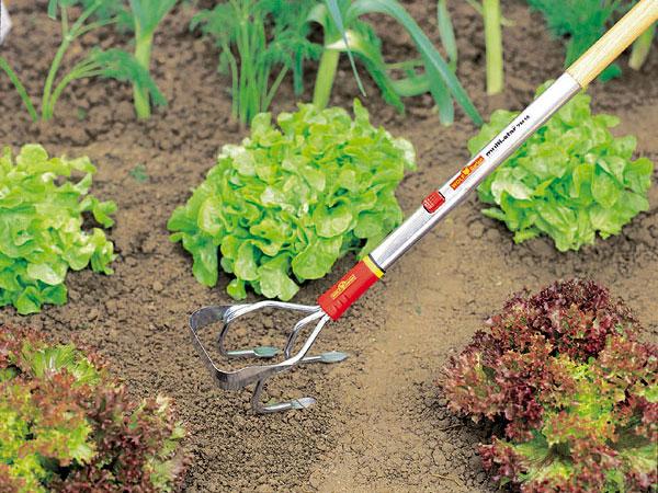 Záhrada, ktorá šetrí čas