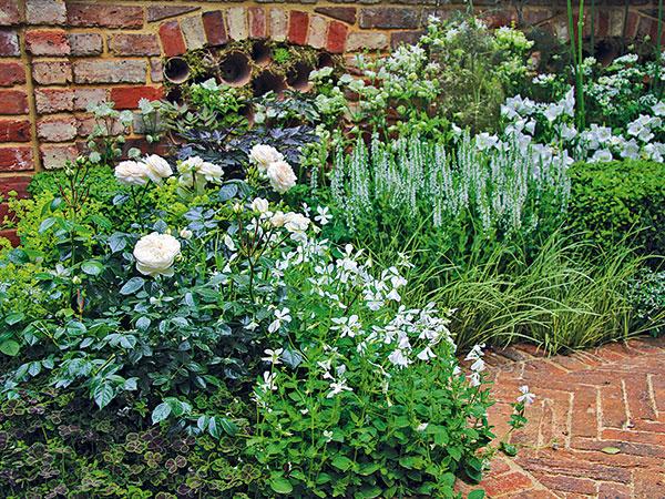 Biele kvety avšade navôkol zeleň. To je ideálny príklad štýlovej aelegantnej záhradnej kompozície. Prípadne kombinácia momentálne trendovej modrej azelenej, ktorá je elegantná azároveň prepožičiava priestoru zaujímavú hĺbku. Biela imodrá farba majú pritom schopnosť navodiť upozorovateľa pocit osvieženia či ochladenia, čo padne vhod najmä vlete. Sortiment bielo amodro kvitnúcich rastlín, hlavne trvaliek, je skutočne bohatý, vprípade bielej farby možno siahnuť aj po rastlinách satraktívne vyzerajúcimi bielo panašovanými listami. Záhrada môže byť vyskladaná len vbielo-zelenej či modro-zelenej kombinácii, prípadne možno zvoliť prevahu bielo alebo modro kvitnúcich rastlín. Ideálne je sústrediť tieto rastliny tam, kde už na pohľad osviežia – na začiatok záhrady, kodpočívadlám či pod stromy. Nie je však dobré záhradu nimi preplniť (najmä nie rastlinami spanašovanými listami). Treba počítať stým, že napríklad bielo-zelenej záhrade treba prispôsobiť aj doplnky, záhradný nábytok či