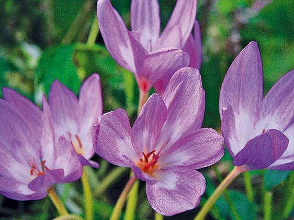 Vašich 10 augustových úloh do záhrady