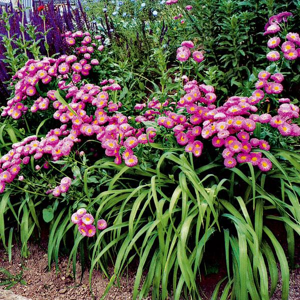 Trvalky kvitnú po celý rok