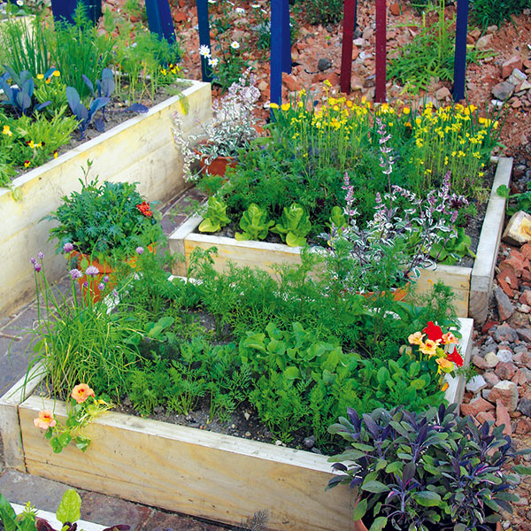 KVETY vúžitkovej záhrade
