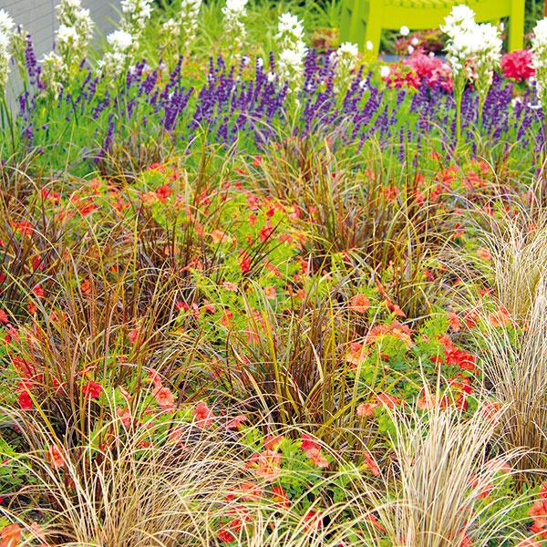 Rozmanité okrasné trávy môžu byť atraktívnou adlhoročnou súčasťou mestskej aj vidieckej záhrady. Mnohé vyniknú vspoločnosti trvaliek alebo drevín, najmä ihličnanov. Kokrasným trávam sú vhodné predovšetkým trvalky so žltými, oranžovými, prípadne bielymi kvetmi, ktoré pekne harmonizujú shnedastými súkvetiami tráv. Rozhodne to ale smnožstvom farieb ahlavne svýberom príliš dominantných odtieňov netreba preháňať. Prínosnejšie je vytvoriť harmonickú kompozíciu, ktorej elegantne vládne trs vyššej alebo stredne vysokej trávy. Mnohé okrasné trávy (kostravy, perovec) sú pôsobivé aj vspoločnosti kompaktnejších ihličnanov (borovíc), do susedstva niektorých (ostrice, perovec) sa žiada vysadiť do skupín aj na jar kvitnúce cibuľoviny. Vtomto období konkrétne narcisy, prípadne botanické tulipány.