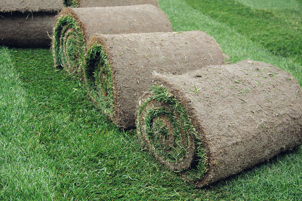 Začiatkom jesene sú optimálne klimatické podmienky na založenie nových trávnikov. Zakladať možno výsevom alebo položením trávneho koberca. Druhý spôsob je síce finančne nákladnejší, no sokamžitým efektom. Výsledkom je hustý sýtozelený azdravý trávnik, ktorý je možné naplno využívať už aj na jeseň. Väčšinou nemá problém sburinou ani machom, rýchlo sa (najmä skoro na jeseň) ujíma apokračuje vraste. Vďaka zakomponovaným hnojivám vyniká obdivuhodnou vitalitou až do konca sezóny. Vďaka trávnym kobercom je možné trávnik založiť aj na svahovitom teréne, čo je pri výseve komplikovanejšie. Predpokladom úspechu je dôsledná príprava pôdy, teda zlikvidovanie stavebného odpadu, širokolistých burín avyrovnanie terénu. Kladenie samotných trávnych kobercov nie je zložité adá sa zvládnuť aj svojpomocne. Trávne mačiny je vhodné objednať od dodávateľa zblízkeho okolia apoložiť ihneď po dodaní. Vtomto období je príležitosť aj na renováciu starších nevzhľadných trávnikov.