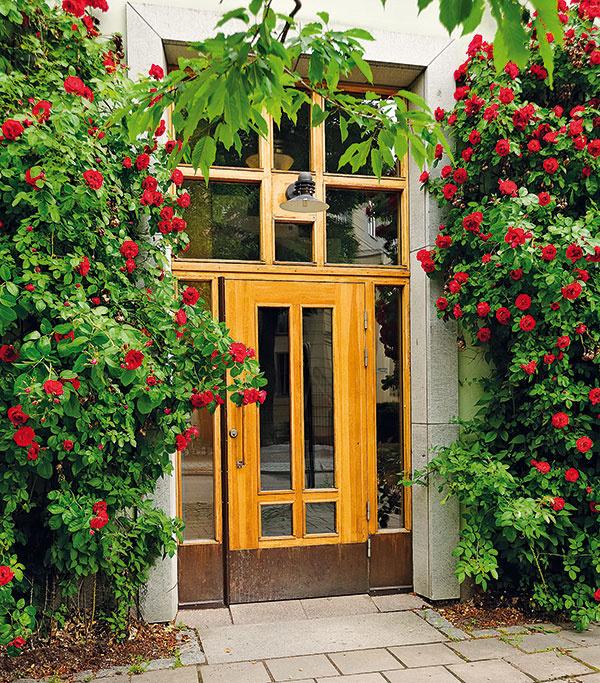 Bežné dvere majú výšku 1 970 mm, vchodové však môžu byť aj vyššie – zvýrazní sa tým vstup do domu (2 100 alebo 2 400 mm nie je ničím neobvyklým). Väčšina výrobcov ponúka aj zhotovenie dverí na mieru, kde sa výška môže vyšplhať aj nad 2 400 mm. Ak sa vám vysoké vstupné dvere páčia, no zhľadiska únosnosti materiálu či konštrukcie nie sú pre vás praktickým riešením, môžete nad dverné krídlo umiestniť svetlík. Vstupné dvere tak budú pôsobiť vyššie afasáda získa zaujímavý kompozičný prvok. Svetlíky, ktoré vnesú svetlo do tmavej chodby azároveň oživia kompozíciu vstupnej časti domu, však môžu byť aj po bokoch dverí.