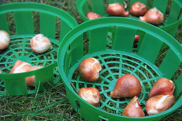 2 tipy, čo môžete v októbri urobiť pre spestrenie záhrady