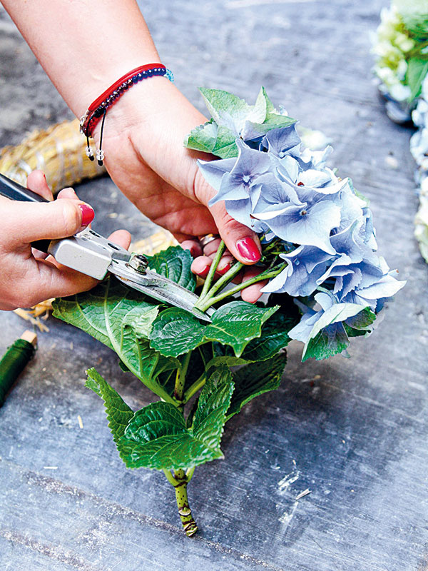 1 Každú hortenziu zastrihnite približne 10 cm pod kvetom aodstráňte aj listy.