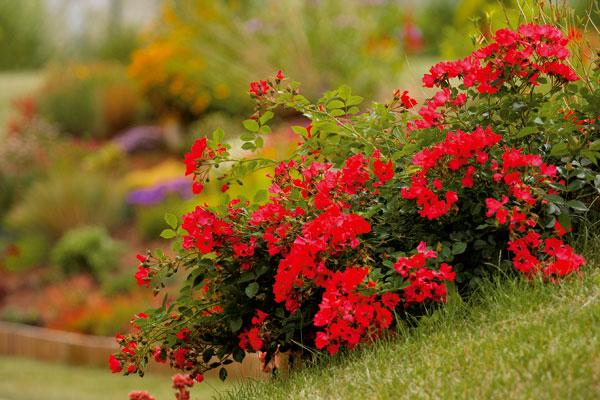 Záhrada naruby