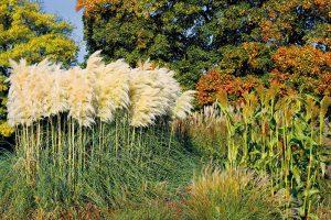 10 najúžasnejších okrasných tráv, ktoré si môžete vysadiť na jeseň