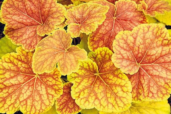 Nezabudnite na svoje októbrové úlohy v záhrade. Že neviete, ktoré to sú?