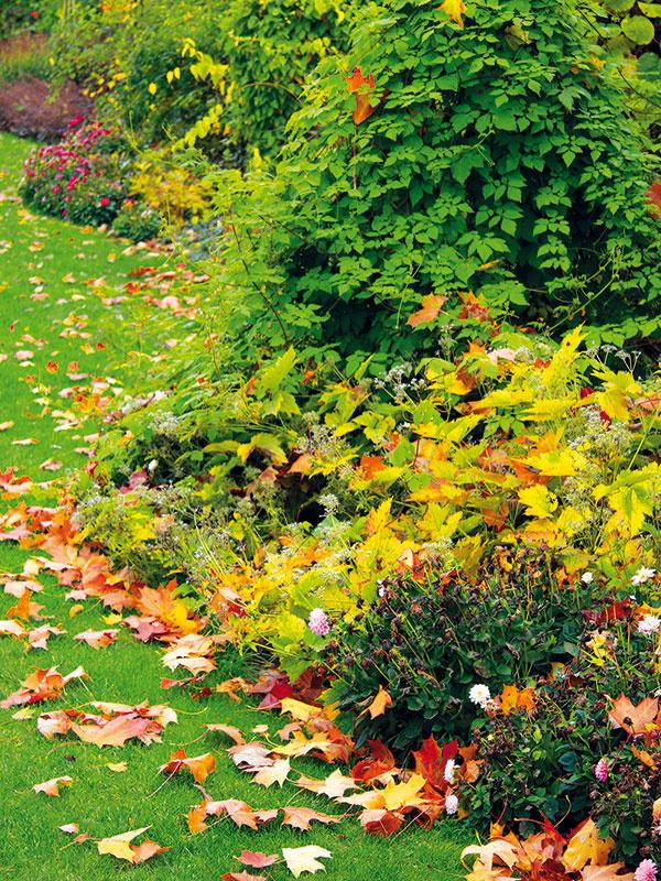 Vprvej polovici novembra ešte stále možno vysádzať solitérne stromy aruže, ako aj zakladať živé ploty zopadavých listnáčov. Vždyzelené dreviny aihličnany už radšej nevysádzajte – iba vprípade, že by bolo teplejšie avlhké počasie. Vdruhej polovici mesiaca môžete po opadaní listov upraviť opadavé kry. Jedince, ktoré sú nepekné aprestarnuté, možno odstrániť úplne alebo ich môžete radikálnejšie zrezať. Nad zemou (vo výške asi 30 cm) sa odstráni asi tretina najstarších výhonov aponechajú sa len tie najmladšie. Kry už na jar nasledujúcej sezóny vyženú nové výhonky aviditeľne ožijú. Koncom júna potom ale treba časť výhonkov ešte odstrániť aponechať len tie najsilnejšie. Na takúto procedúru myslite pri vajgéliach, pajazmínoch, zlatovkách, tavoľníkoch, dulovci, okrasných ríbezliach akalinách. Počítať však treba stým, že minimálne rok tieto dreviny nezakvitnú.