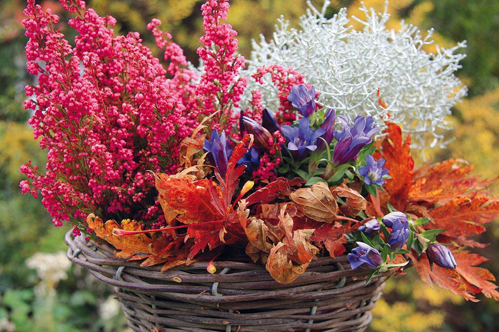 Nádherné modré kvety horcov (Gentiana) sú na jeseň neprehliadnuteľné. Možno ich vysadiť do vresoviska apôsobivé sú aj v(závesných) nádobách, prípadne vkošíkoch vkombinácii svresmi, sivastými starčekmi, sirôtkami, cyklámenmi alebo nižšími trávami. Najkrajšie vyniknú počas slnečných dní sústredené vo väčšej skupine, preto je aj lepšie umiestniť ich na slnečné ateplejšie miesta (pri stene domu). Horce si vyžadujú mierne vlhký substrát svyšším obsahom vápnika. Ak sa pestujú vnádobe, po odkvitnutí postačí zvädnuté kvety odstrániť arastlinu presadiť do záhrady (ideálne vdňoch, keď je slnečno anemrzne).