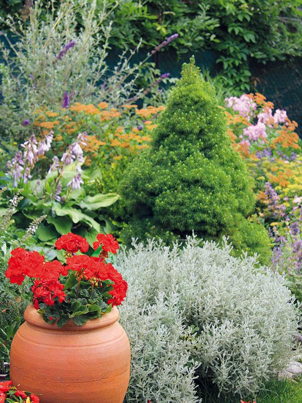 Výsadbu vzáhonoch na niektorých miestach dopĺňajú rastliny vterakotových nádobách. Červené pelargónie do záhrady vnášajú živú farebnosť.  Na okraji trávnika vyniká striebristá santolína (Santolina chamaecyparis).
