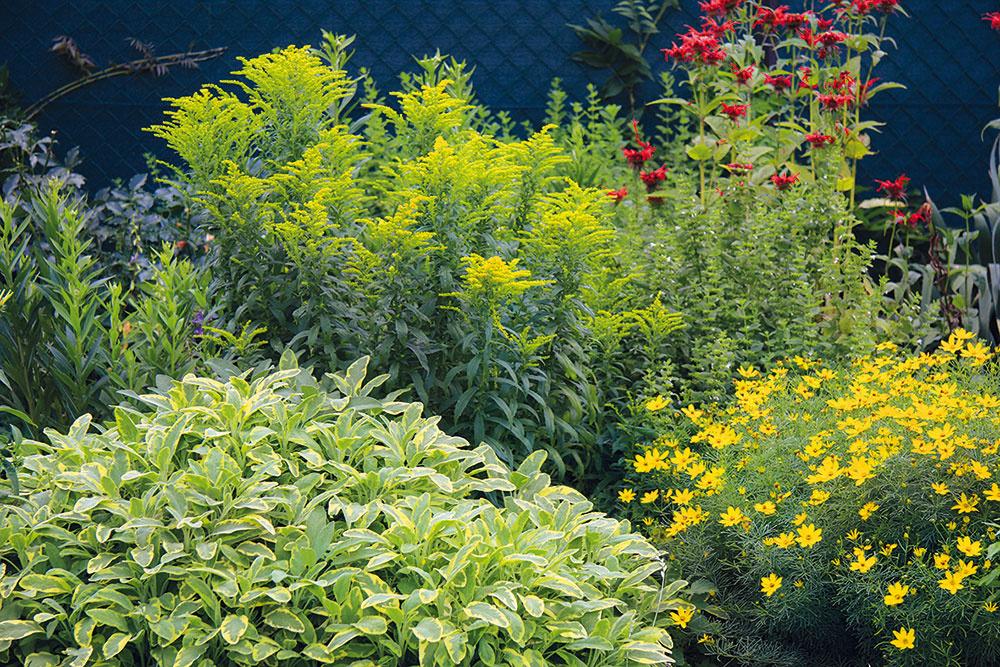 Záhrada počas roka naozaj hýri pestrými farbami. Vtejto časti trvalkového záhona nájdete pekne skombinované krásnoočko (Coreopsis verticilata), monardu, zlatobyľ ašalviu (Salvia officinalis 'Icterina').