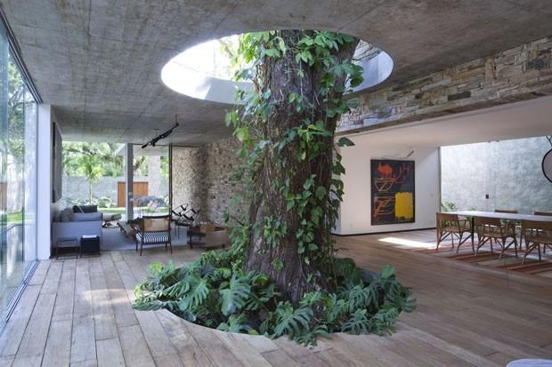 Obrovskému stromu, ktorý im prerastá cez podlahu i strop, dali aj meno