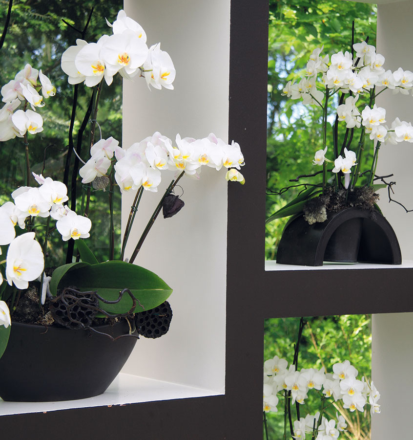 NA OČISTU VZDUCHU vkúpeľni, obývačke či kuchyni sú vhodné aj orchidey. Samozrejme, treba prihliadať na podmienky danej miestnosti. Vybrať si môžete zrôznych druhov.