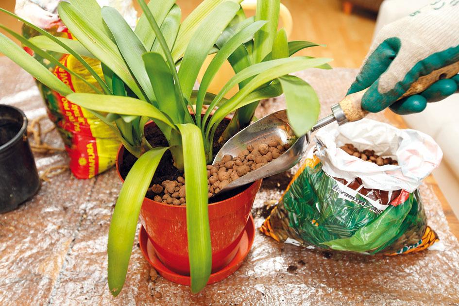 9 Dekorácia povrchu. Povrch substrátu presadenej rastliny vysypte drobnejším štrkom alebo ideálne keramzitom. Zabránite tak rýchlejšiemu vyparovaniu vody zo substrátu apodporíte rýchlejšiu tvorbu nových korienkov. Po presadení bude rastlina lepšie prijímať vlahu aj živiny, čo sa zakrátko prejaví na jej vzhľade.