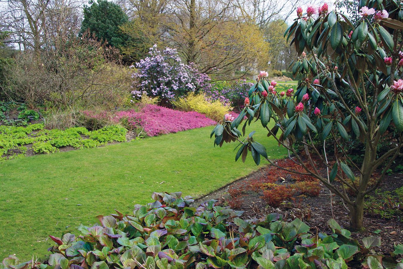 Apríl je ideálny na zakladanie trávnika. Dôležitý je aj jeho tvar, ktorý nie je dobré podceniť najmä vmestskej záhrade. Trávnik vtvare štvorca vynikne vmenších záhradách, átriách apri domoch splochou strechou. Zaujímavé je skombinovať dva či tri štvorce (aj rôznych veľkostí). Vzáhradách formálneho typu pôsobí pekne obdĺžnikový trávnik, ktorý ale musí mať správne zvolené rozmery. Pri ich voľbe sa riaďte tzv. zlatým rezom apoužite pomer strán 2 : 3. Vtvare obdĺžnika môžete potom vzáhrade vytvoriť aj záhon, prípadne dva, dekoratívnu štrkovú plochu či vodnú nádrž. Momentálne trendový je kruhový trávnik, ktorý vynikne aj pri staršom vidieckom dome.