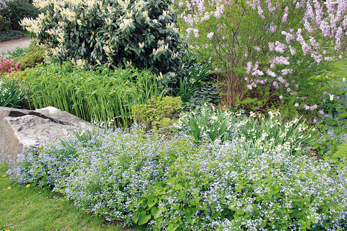 Ostrihať treba suché aodkvitnuté kvety trvaliek, suché stonky aj listy. Tento úkon zbytočne neodkladajte, pretože staré stonky bránia rozvoju nových výhonkov. Záhony vyčistite aj od nafúkaného lístia, odstráňte burinu azvážte redukciu rozrastených druhov trvaliek kvitnúcich vlete ana jeseň. Tie, čo kvitnú na jar, rozdeľte až po ich odkvitnutí. Trsy trvaliek treba omladzovať raz za tri až štyri roky. Pôdu vich okolí prekyprite aktrsom nasypte kvalitný preosiaty kompost alebo dlhodobo pôsobiace hnojivo. Zabúdať by ste nemali ani na zálievku kvitnúcich cibuľovín. Vdruhej polovici mesiaca môžete záhon spestriť novými trvalkami, prípadne kvitnúcim krom.