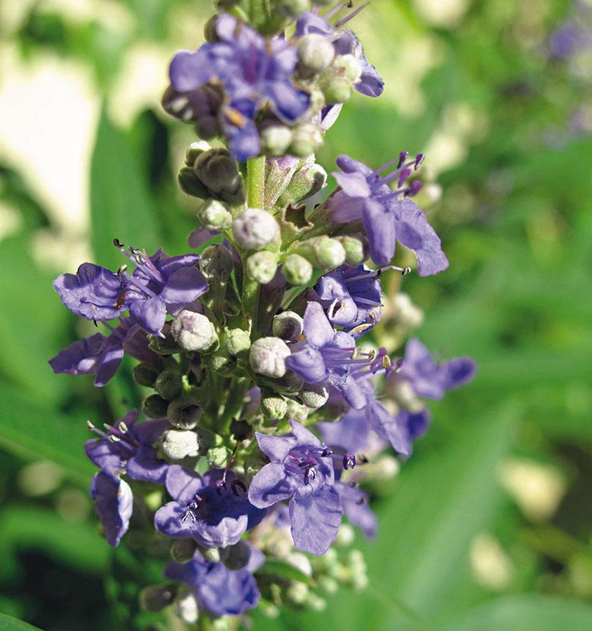 Záhradná poradňa - pýtate sa a my odpovedáme