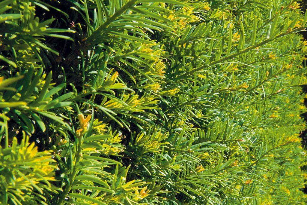Záhradná poradňa – pýtate sa a my odpovedáme