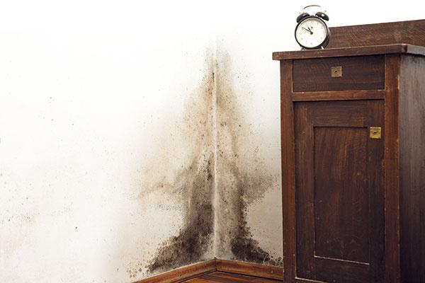 Ako zatočiť s plesňou na stenách?