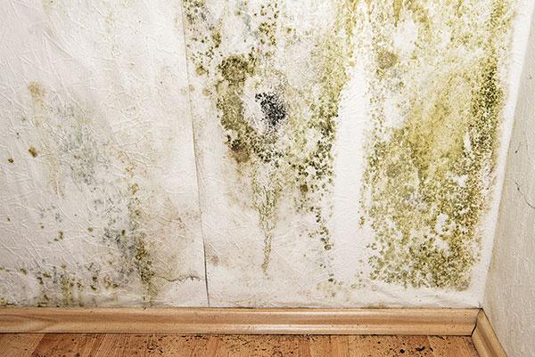 Je to štandard nejedného rodinného domu. Kuchyňa susedí svetranou špajzou, ktorá je oddelená iba tenkou priečkou. Hoci za oknami nie je príliš chladno, tenká priečka je chladnejšia ako obvodový múr. Odkedy sú okná tesnejšie anamiesto uhlia sa kúri plynom, stena sa pokrýva plesňou. Vtakejto situácii niet nad čím rozmýšľať. Či zjednej, alebo druhej strany, tenkú priečku treba zatepliť. Môže to byť polystyrén pod sieťou so stierkou alebo sklená vata pod fóliou asadrokartónovým záklopom – je to riešenie, ktoré spoľahlivo funguje.