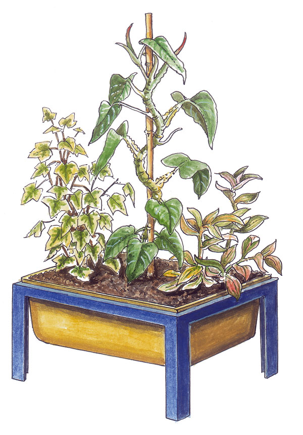 Hydroponické pestovanie rastlín