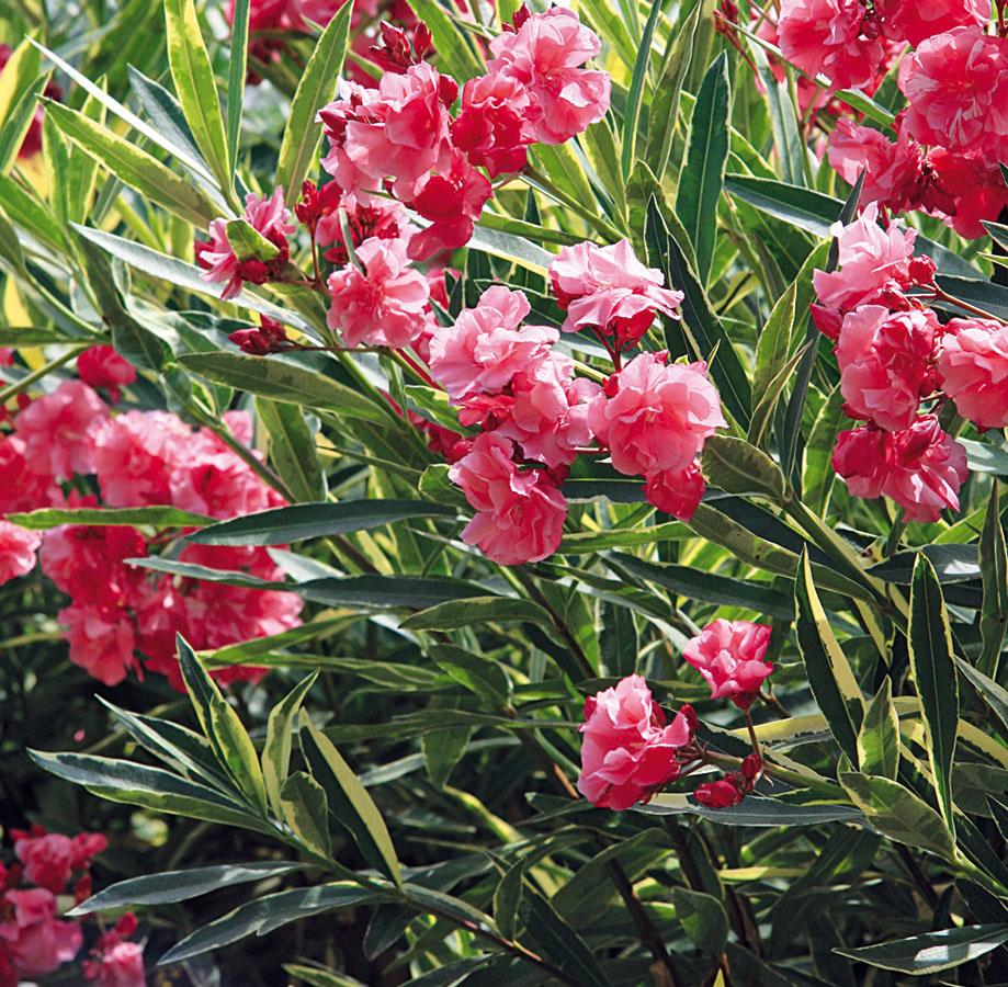 Čo by ste nemali v máji premeškať vo vašej záhrade