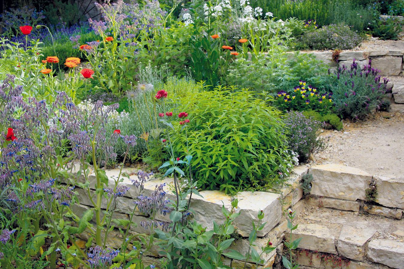 Teplé, suché a slnečné stráne obľubujú rôzne bylinky, aromatické rastliny či druhy pochádzajúce zo Stredomoria. Prednosti takéhoto miesta v záhrade možno využiť napríklad na vytvorenie bylinkových múrikov. Dariť sa tu bude levanduli, saturejke, tymianu, pamajoránu, šalvii, nechtíku či boráku. Bylinky je vhodné vysádzať v apríli a máji s koreňovým balom, pričom ideálne je vytvárať menšie či väčšie skupinky z jedného druhu. Po výsadbe postačí rastliny zopár ráz zaliať, aby sa dobre zakorenili a následne už nebudú vyžadovať špeciálnu starostlivosť. Príliš dlhé múriky môžete doplniť schodíkmi a plošinkami, z ktorých bude možné porasty v prípade potreby ošetriť, prípadne tu môžete oddychovať a vnímať okolité vône.