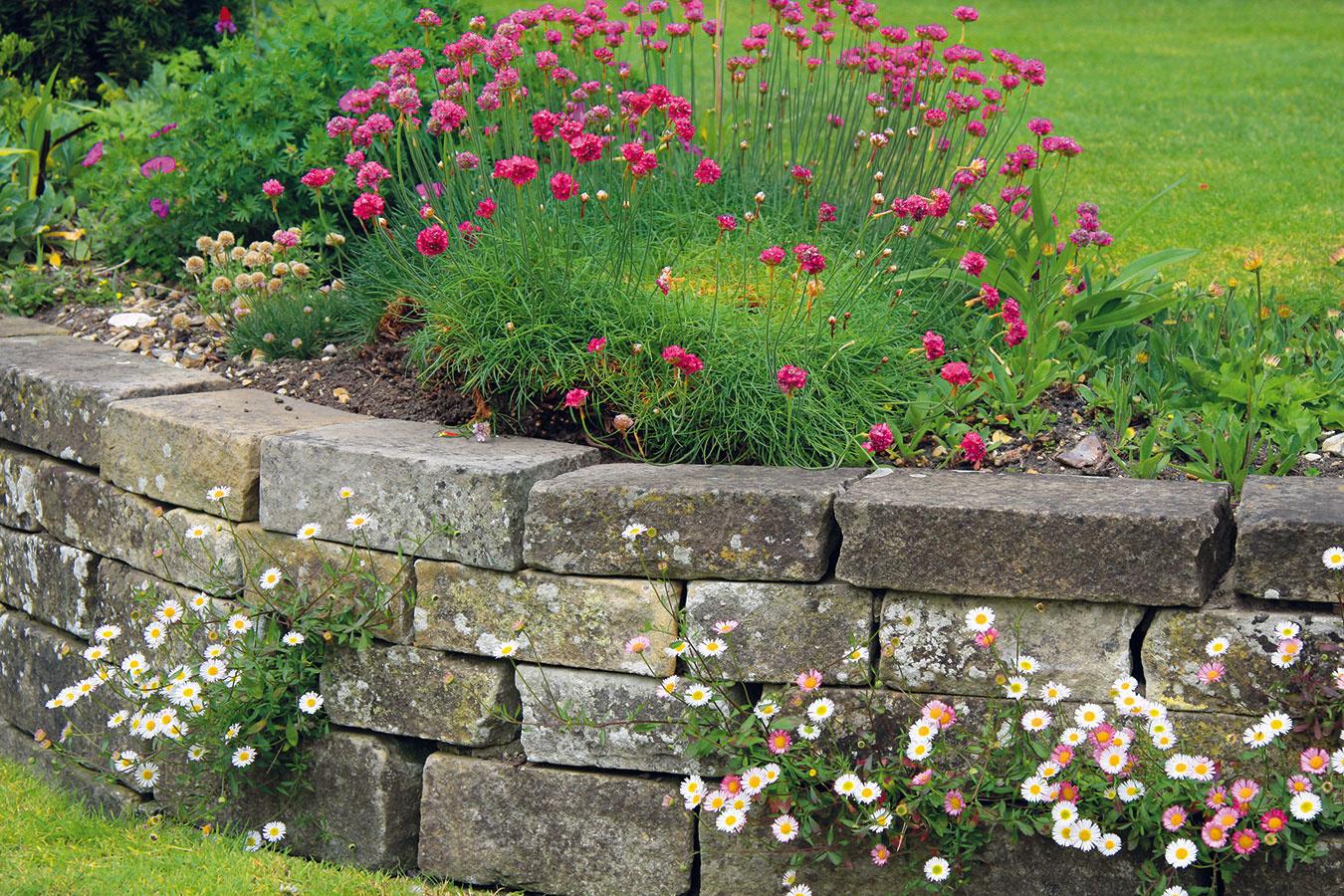 Aj trávnik, ktorý tvorí niekoľko výškových úrovní, možno oddeliť múrikmi. Použitý kameň by mal podobne ako pri všetkých múrikoch pochádzať z danej lokality. Pohrať sa môžete s jeho farebnosťou. Platí, že rôznofarebnosť vyvoláva napätie a jedna farba podporuje pocit pohody. Na tmavšom kameni, ktorý je ideálny do polotienistej záhrady, vyniknú kvitnúce rastliny (najmä s ružovými a bielymi kvetmi) viac. Tmavšia farebnosť je typická pre žulu a rulu, takmer čierne sú čadič a bridlica. Kamene s červenkastými odtieňmi sú vhodné najmä do stredomorsky ladenej záhrady. Pri budovaní takýchto múrikov treba dať pozor na to, aby medzi kameňmi nevznikli priveľké škáry. Ich realizáciu je vhodné zveriť odborníkom.