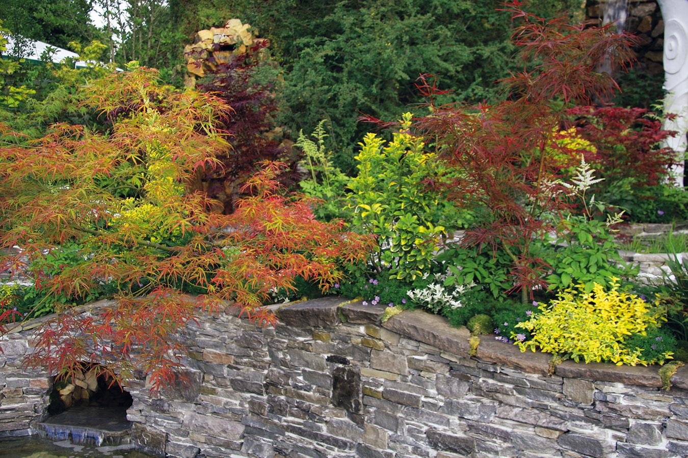 Múriky môžu byť aj súčasťou kompozície v ázijskom štýle. Na korune murovaných múrikov, ktoré musia mať aspoň 80 cm hlboký betónový základ, sa pekne rozrastú japonské javory, pierisy alebo vždyzelené bršleny. Múrik môže vytvárať aj kulisu pre vodnú nádrž a ukrývať miesto, odkiaľ vyteká voda. Netradičný je vlnitý tvar koruny múrika, na ktorý môžu nadväzovať vlnité okraje záhonov či kľukaté cestičky. Pri takomto type múrika treba starostlivo zvážiť nielen výber kameňa a jeho farebnosť, ale aj výber škárovacej hmoty. Tá by mala s kameňom buď plne ladiť, alebo mierne kontrastovať. Aj tu platí, že kamene musia byť v múriku vždy zviazané, čo zaistí celistvosť a dobrú nosnosť múrika.