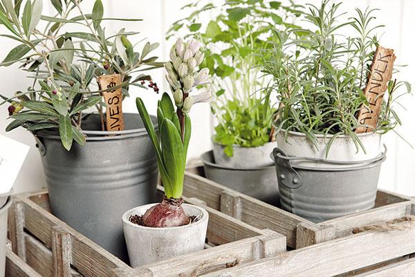 Zeleň vdýchne každému balkónu jedinečnosť a pobyt na ňom bude určite ešte príjemnejší. Svoje miesto si tu nájdu nielen okrasné rastliny vo vegetačných nádobách, ale pestovať tu môžete napríklad aj paradajky, jahody alebo obľúbené bylinky. Na jar vám dni môžu spríjemniť cibuľoviny, v lete široká ponuka pestrých letničiek.