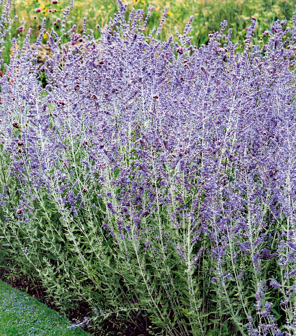 August v záhrade
