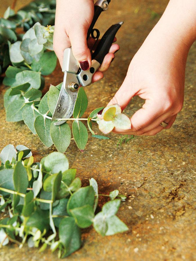 Eukalyptus apistáciu skráťte záhradníckymi nožnicami na približne 10 cm dlhé kúsky (podľa výšky nádoby).