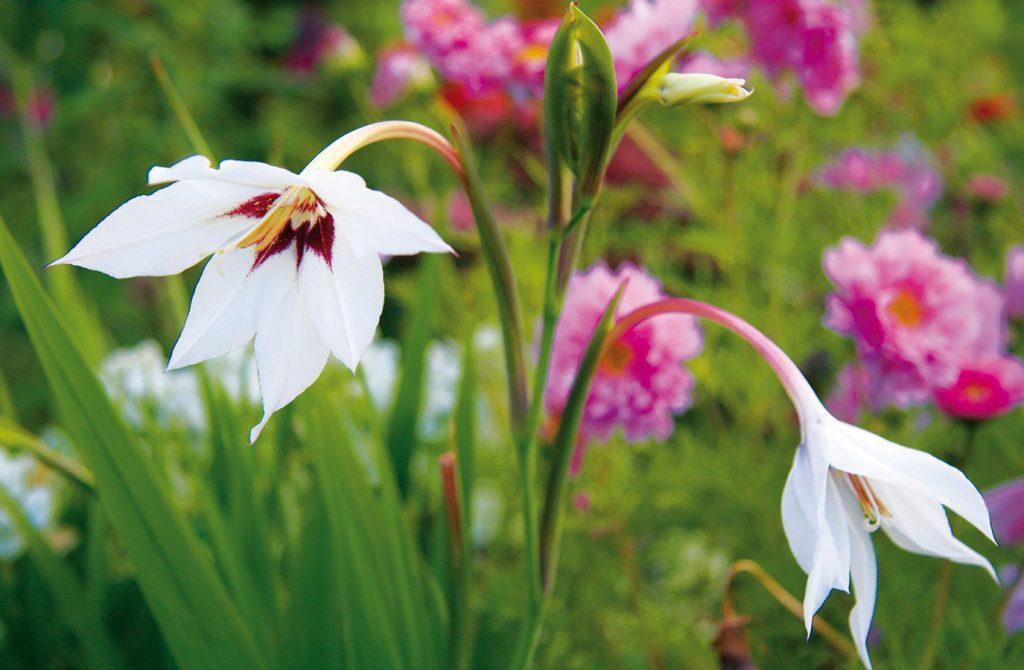 10 najkrajších rastlín pre rozkvitnuté leto