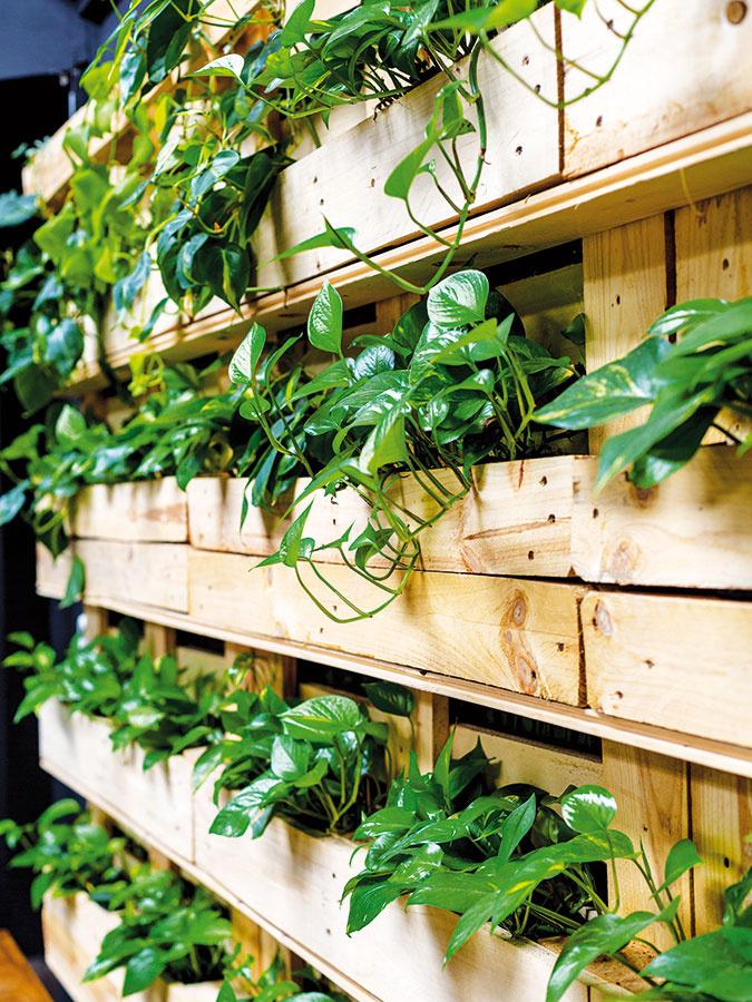 Vegetačnou stenou zpaliet sa majiteľ inšpiroval vjednom berlínskom hoteli arozhodol sa ju použiť aj vtejto prevádzke. Jednotlivé rastliny sú vysadené vmenších kvetináčoch.