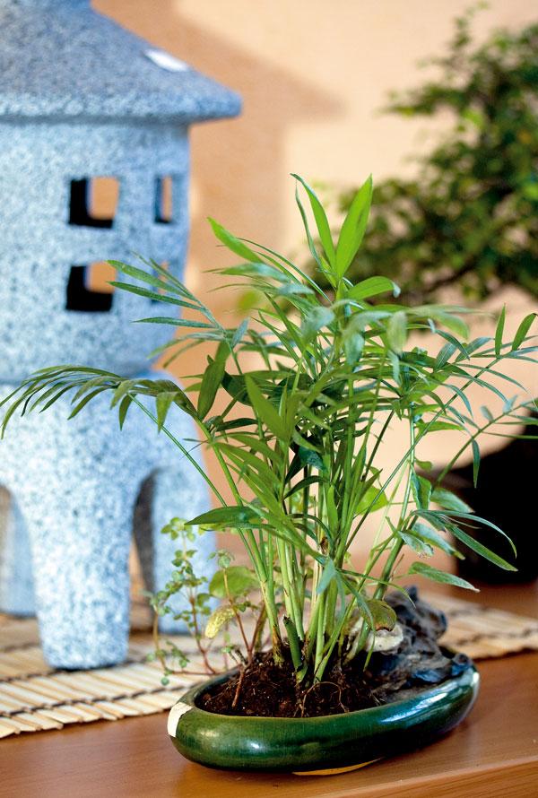 Zásady pestovania bonsajov