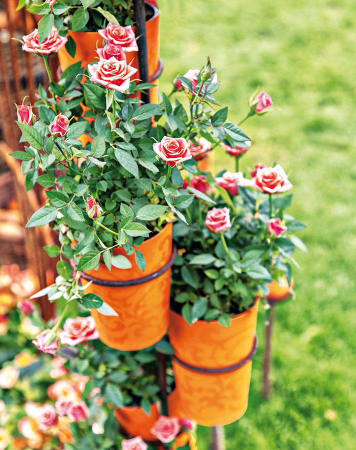 Nový domov pre kvetináče. Aj uvás vkôlni či kdesi vzadu vzáhrade drieme stará kovová konštrukcia, ktorá kedysi slúžila na umiestnenie rastlín vinteriéri? Vdýchnite jej nový život, ošetrite ju proti hrdzi, doplňte vhodnými kvetináčmi aumiestnite napríklad kplotu. Takto si môžete vysadiť napríklad miniatúrne ruže.