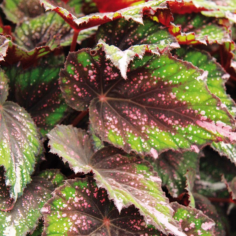 Zimnú záhradu sa nevypláca preplniť množstvo bežných izbových rastlín, žiada si to premyslenejší prístup.